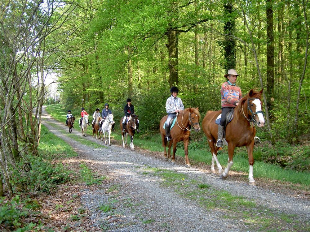 Activités sportives - équitation
