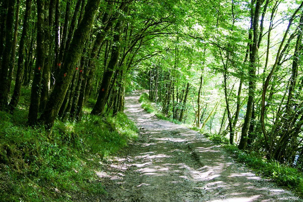 La forêt de Mervent 3